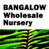 Bangalow Wholesale